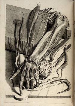 The Composition of the Text: The Purple Island (1633) and Mimesis of Anatomical Demonstrations and Illustrated Textbooks